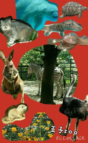 行ってきました!王子動物園